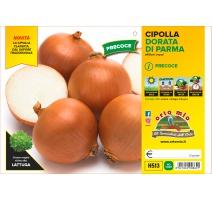 CIPOLLA DORATA PRECOCE DI PARMA H513