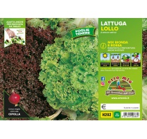 LATTUGA LOLLO MIX H202