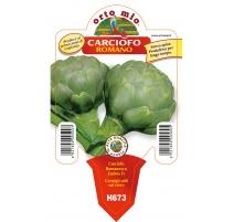 CARCIOFO ROMANO H673