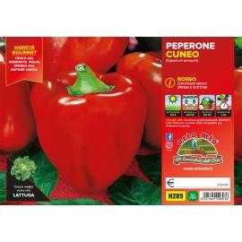 PEPERONE ROSSO DI CUNEO H289