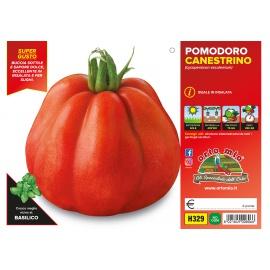 POMODORO CANESTRINO H329