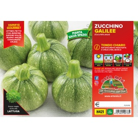 ZUCCHINO TONDO CHIARO H421
