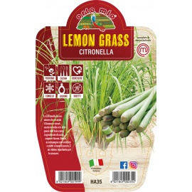 LEMON GRASS O CITRONELLA