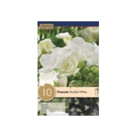 BULBI FREESIA DOUBLE WHITE