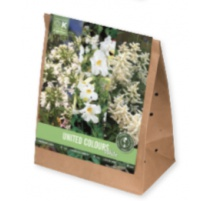 BULBI TRIOPACK COLLECTION PERENNIAL PLANTS WHITE