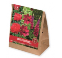 BULBI TRIOPACK COLLECTION PERENNIAL PLANTS BURGUNDY-RED