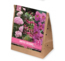 BULBI TRIOPACK COLLECTION PERENNIAL PLANTS PINK