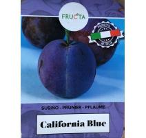 SUSINO CALIFORNIA BLUE