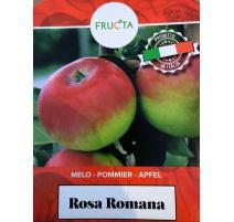 MELO ROSA ROMANA