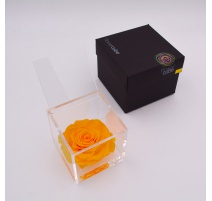 ARS NOVA FLOWERCUBE 10x10 CM COLORE GIALLO