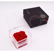ARS NOVA 4 ROSE FLOWERCUBE 10x10 CM COLORE ROSSO