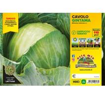 CAVOLO CAPPUCCIO PIATTO H085