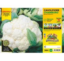 CAVOLO CAPPUCCIO A CUORE ROSSO H086