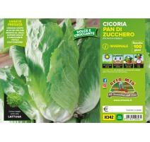 CICORIA/RADICCHIO PAN DI ZUCCHERO H340