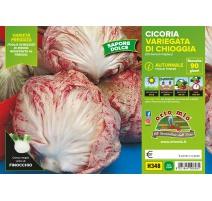 CICORIA/RADICCHIO VARIEGATA DI CHIOGGIA PRECOCE H355