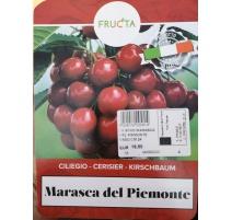 CILIEGIO MARASCA DEL PIEMONTE