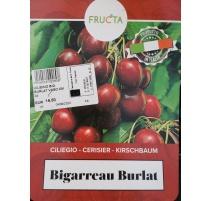 CILIEGIO BIGARREAU BURLAT