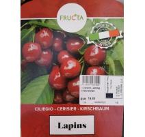 CILIEGIO LAPINS