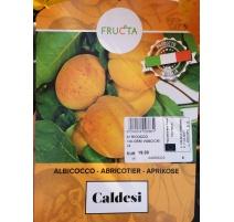 ALBICOCCO CALDESI