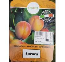ALBICOCCO AURORA