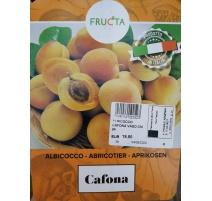 ALBICOCCO CAFONA