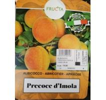 ALBICOCCO PRECOCE D'IMOLA