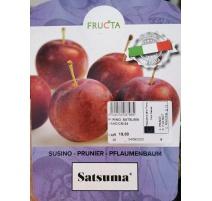 SUSINO SATSUMA