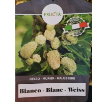 GELSO BIANCO